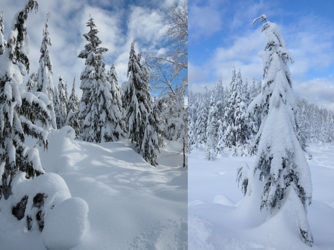 snowshoe blog photo 1