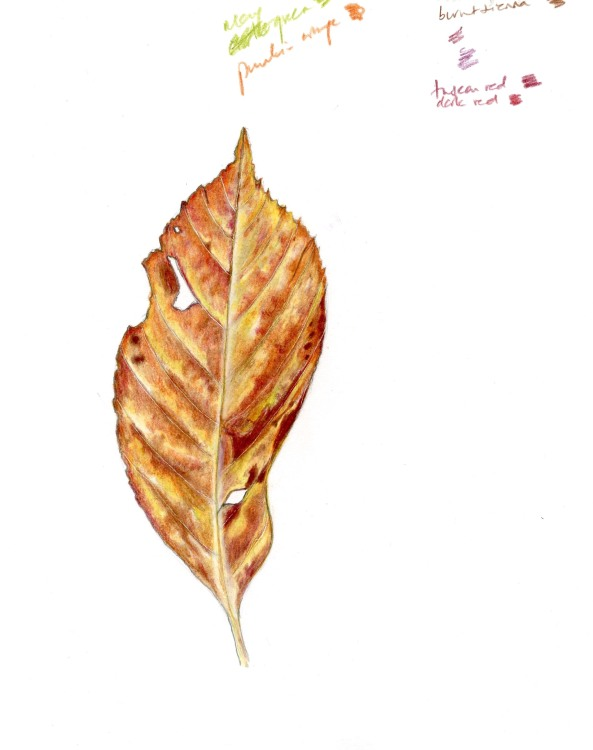 autumn_leaf_crop