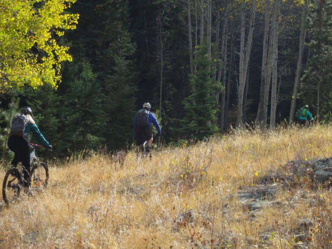 mountain biking near Merritt