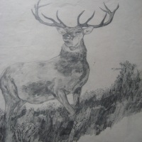 Monarch of the Glen – Getting Inspired to Draw Again