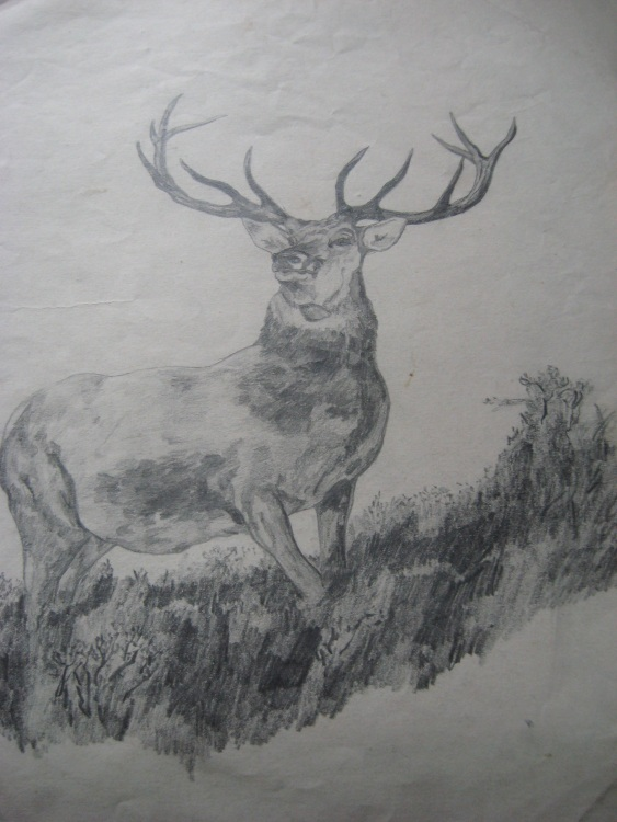 drawing of Monarch of the Glen