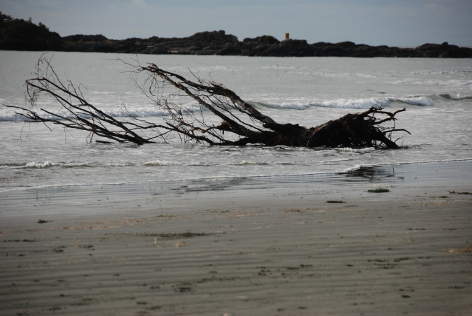Driftwood, Chesterman Beach, Tofino
