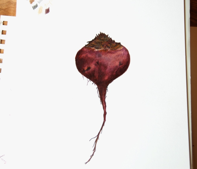 Drawing of a beetroot