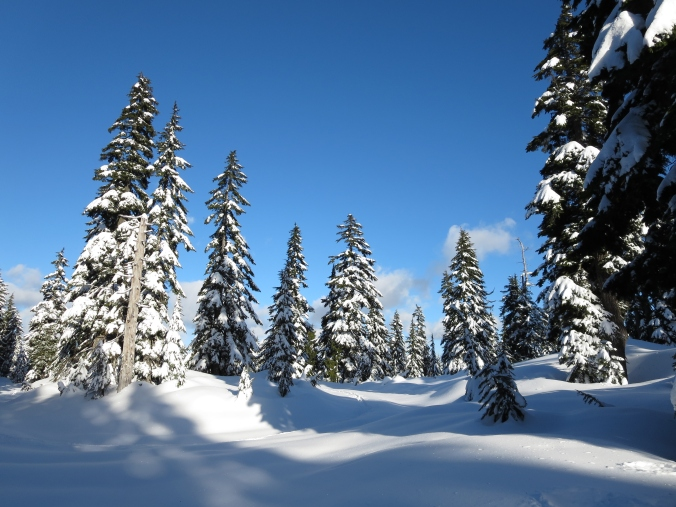 Snowy forests, snowshoeing