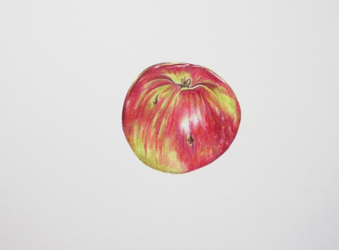 Drawing an apple with coloured pencils