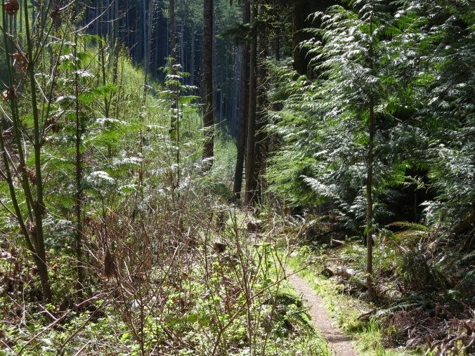 Woodland, Canada