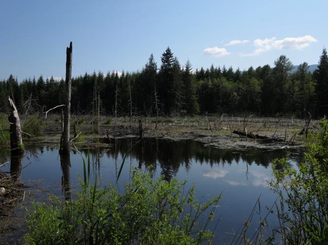 freshwater marsh