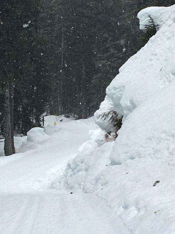 BC ski trails