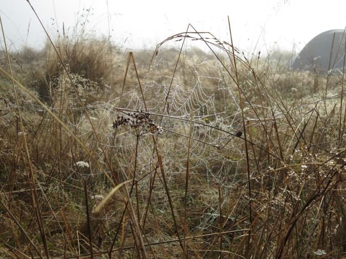 dew-laden cobweb